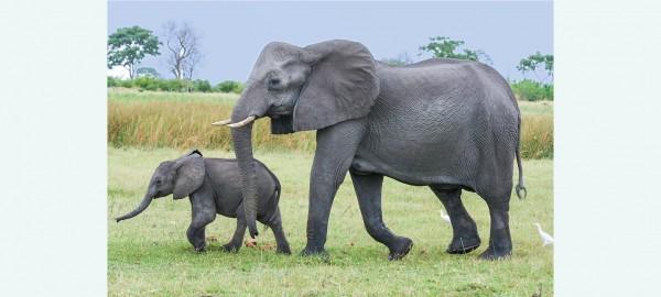 Van slangen tot olifanten
