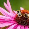 Gezonde groenten en dansende bijen
